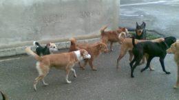 varie-cani-randagi