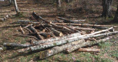 Rubano legname e deturpano bellezze naturali, tra i denunciati anche un uomo di Acri